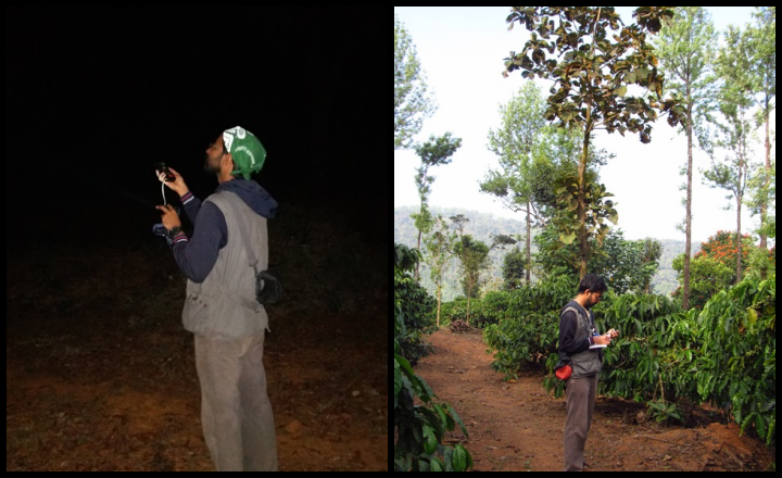 Researchers collecting data on bat calls (left) and plantation vegetation (right)