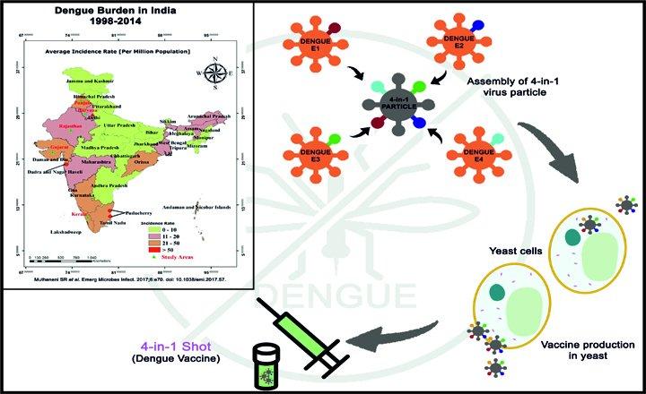 Creation of a Dengue tetravalent vaccine