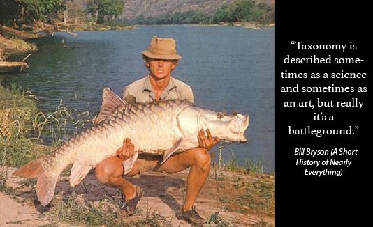 Martin Clark with a hump-backed mahseer of 92lb captured from the middle Cauvery in 1978
