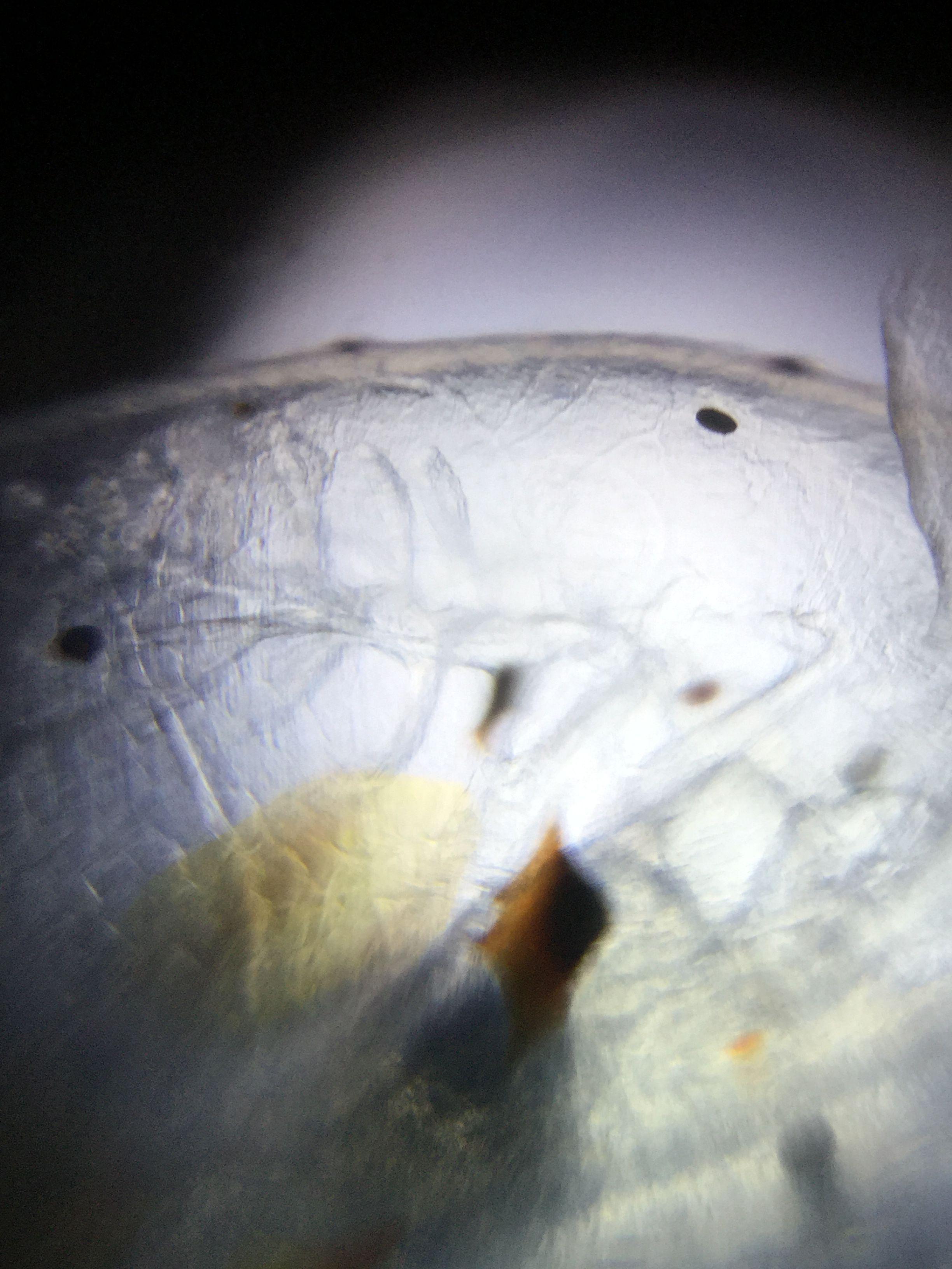 Foldscope-image-2.JPG#asset:4216