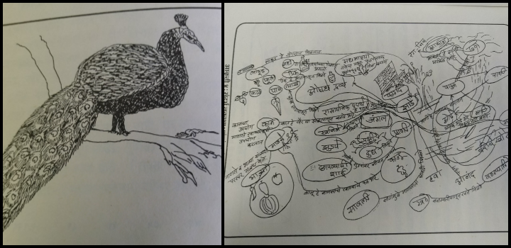 Drawing of a peacock and context map of living and non-living things from a forest by different Ashramshala students (DLIPS Project report)