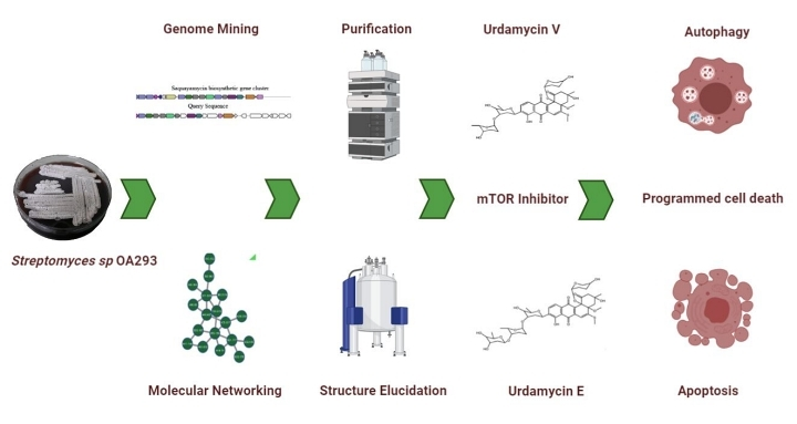 Urdamycin Workflow