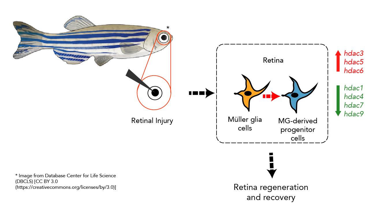 Zebrafish infographic