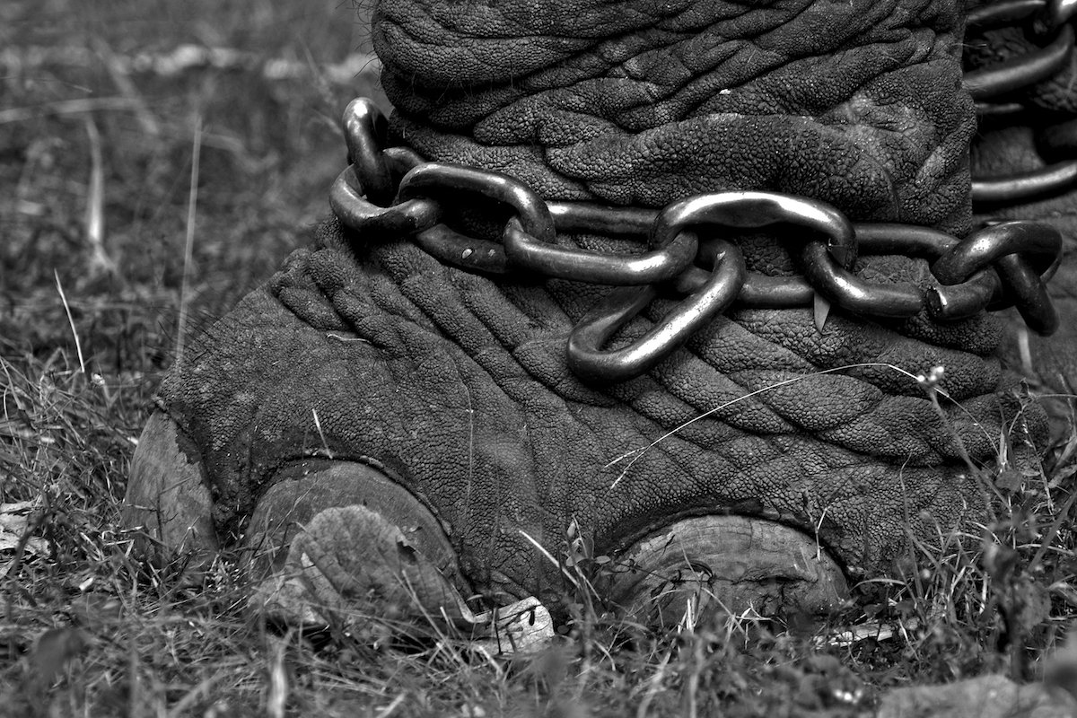 art_IS_may2016_Elephant_chains.jpg#asset