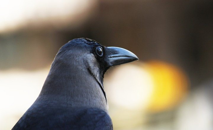 The dark side of light: Lessons from a crow