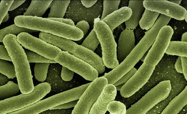 Bug Speaks: India's first microbiome company