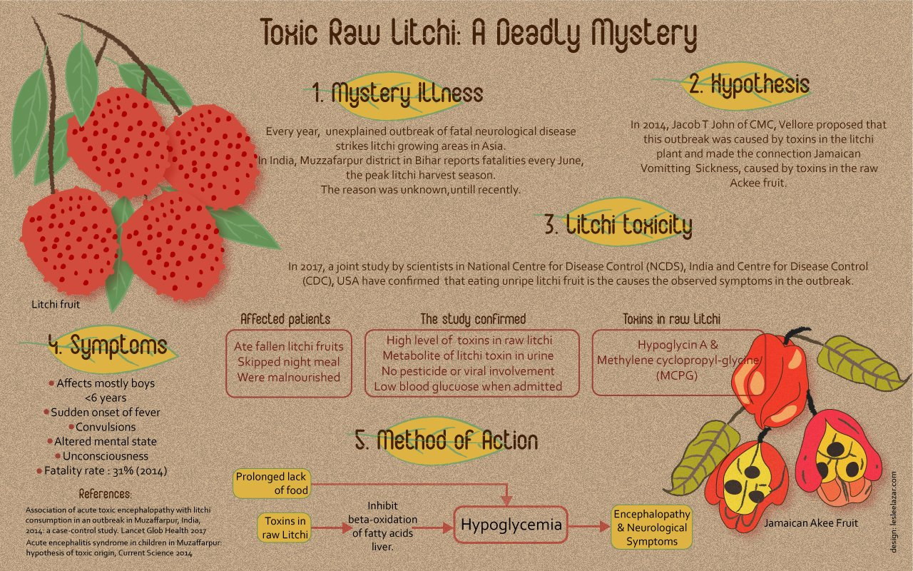 Raw litchis to lethal brain damage: an infographic