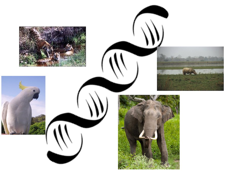 DNA sequencing for wildlife conservation