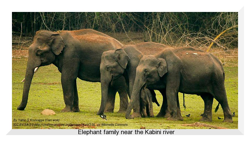 Elephant family at Kabini