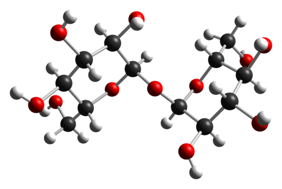 Ball and stick model of the trehalose molecule