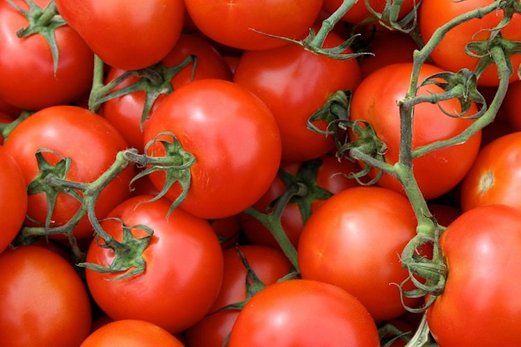 Tomatoes, a suitable choice for nutritional enrichment with flavonols