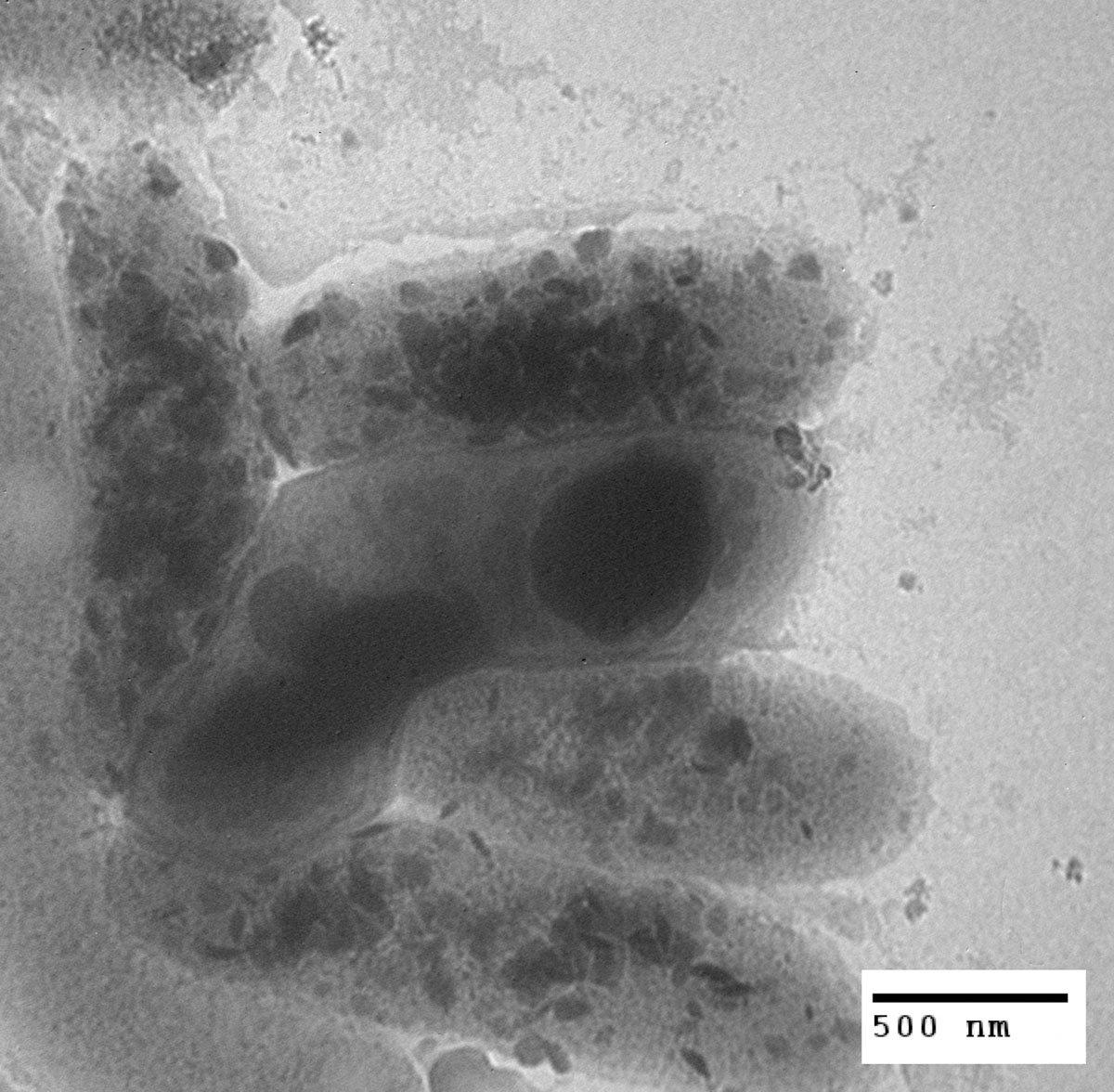 Bacteria_xForm.jpg#asset:573