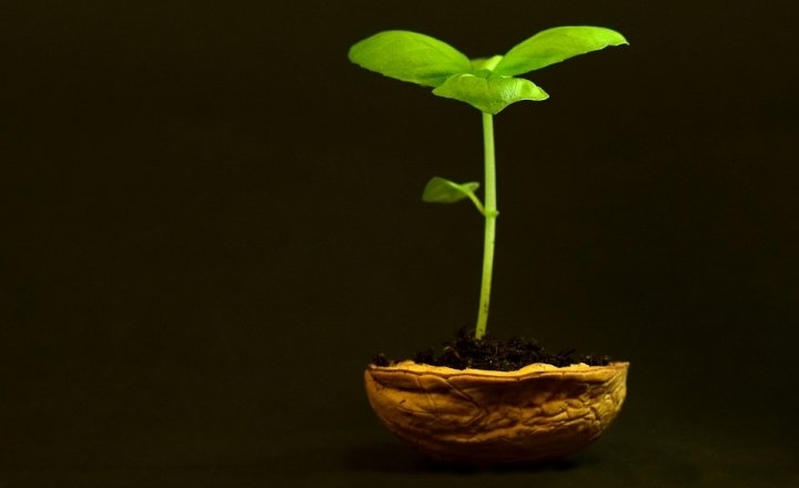 Plant 3117525 960 720